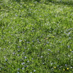 Botanischer_Garten_03