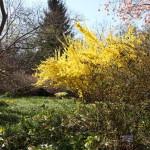Botanischer_Garten_07