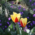 Botanischer_Garten_09