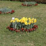 Botanischer_Garten_13