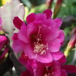 Botanischer_Garten_18