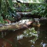 Botanischer_Garten_20