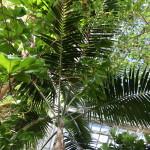 Botanischer_Garten_29