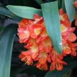 Botanischer_Garten_32