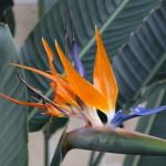 Botanischer_Garten_33