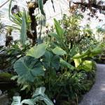 Botanischer_Garten_35
