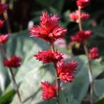 Botanischer_Garten_38