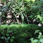 Botanischer_Garten_50
