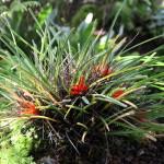 Botanischer_Garten_53