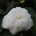 Botanischer_Garten_58