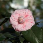 Botanischer_Garten_59