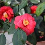 Botanischer_Garten_61