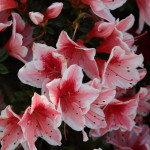 Botanischer_Garten_63