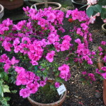 Botanischer_Garten_64