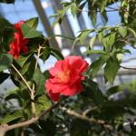 Botanischer_Garten_66