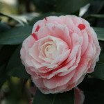 Botanischer_Garten_70