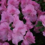 Botanischer_Garten_71