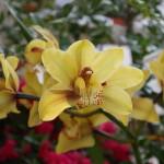 Botanischer_Garten_72