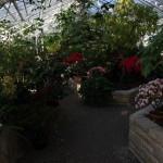 Botanischer_Garten_75