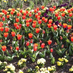 Botanischer_Garten_78