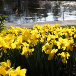 Botanischer_Garten_79