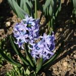 Botanischer_Garten_80