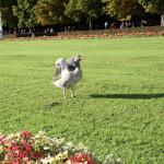 Schlosspark_Nymphenburg_14
