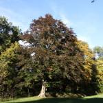 Schlosspark_Nymphenburg_23